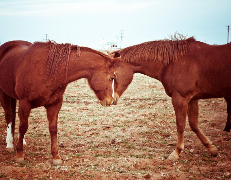 pet photography animals plano dallas carrollton dfw