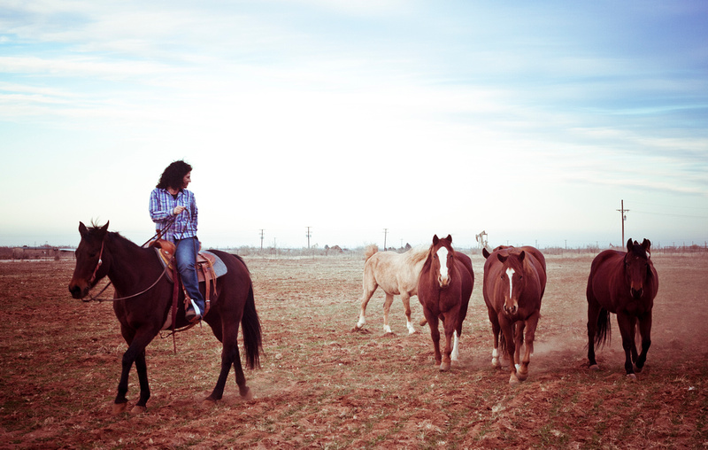 horse photography midland dallas carrollton plano